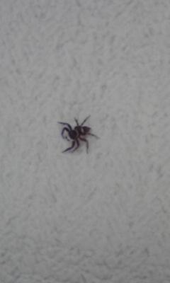 久々の蜘蛛ちゃんだ