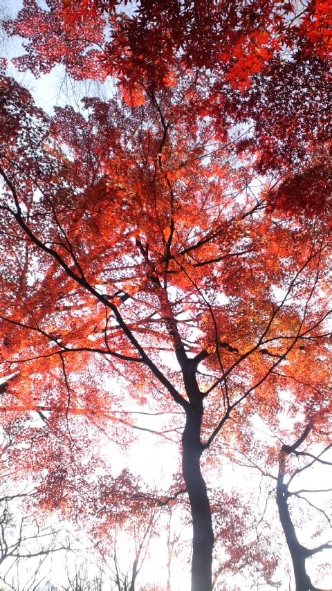 紅葉ずれてる